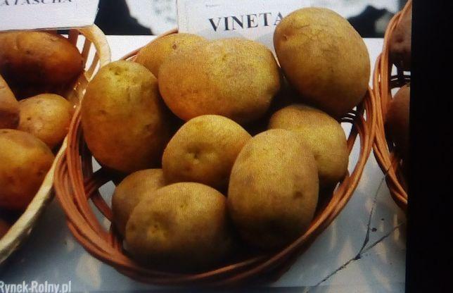 Ziemniaki vineta jadalne sadzeniak  pszenica owies przenżyto siano