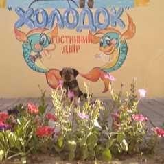 Гостинный двор ХОЛОДОК-ГЕНИЧЕСК море отдых вiдпочинок