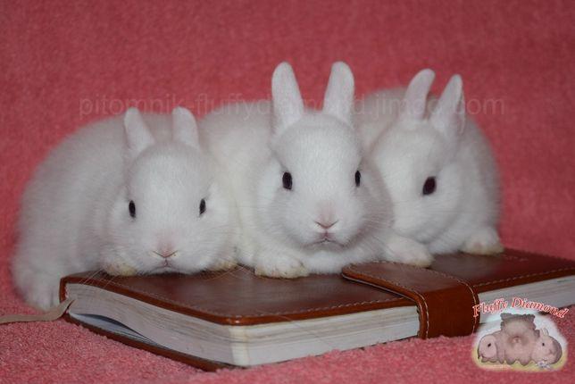 Карликовые кролики. Разных пород. Привитые крольчата из питомника