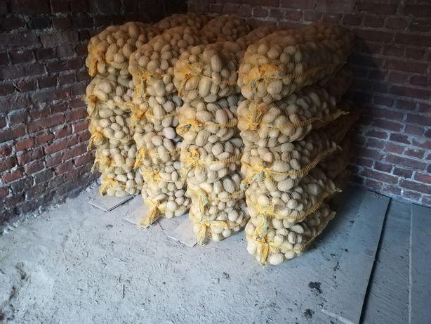Ziemniaki Tajfun Pajęczno