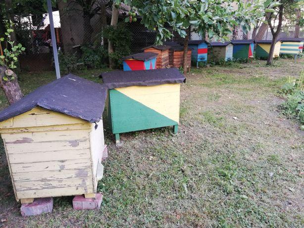 Ul z pszczołami, kompletny z ramkami