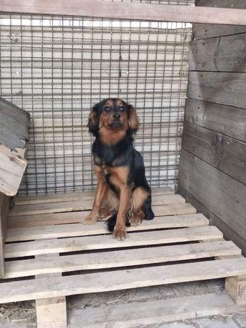 Znaleziono psa suczkę suczka pies psiak znaleziony