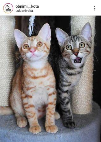 Котята ищут дом!!!