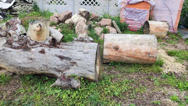 Kasztan przedwojenny drzewo drewno średnica 70cm około 4m3