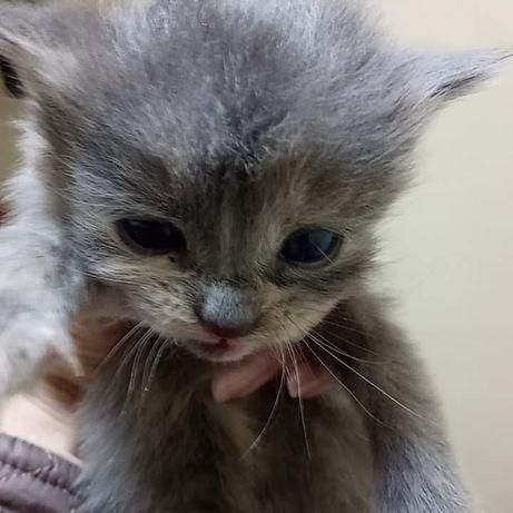 Котята в поиске дома и любящем хозяине!