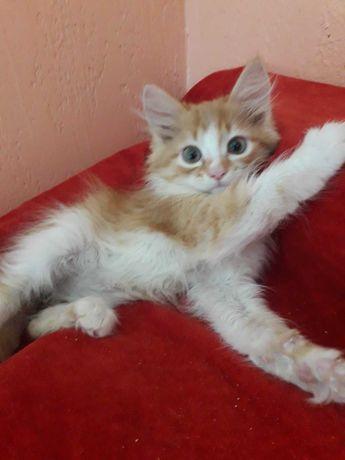 котик рыжее солнышко