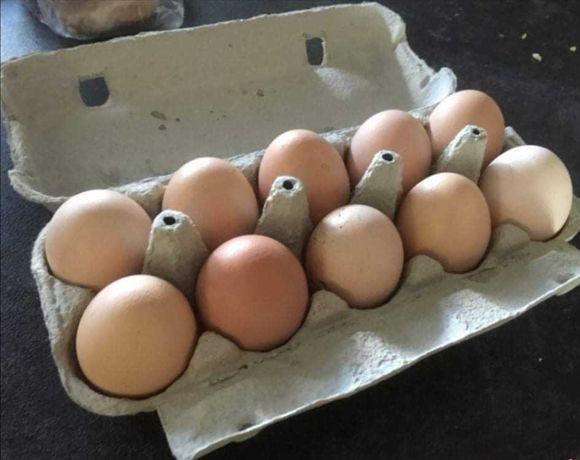 Świeże jajka wiejskie od kur z wolnego wybiegu