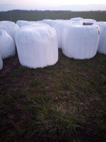 Sianokiszonka/kiszonka bele z traw ugorowych