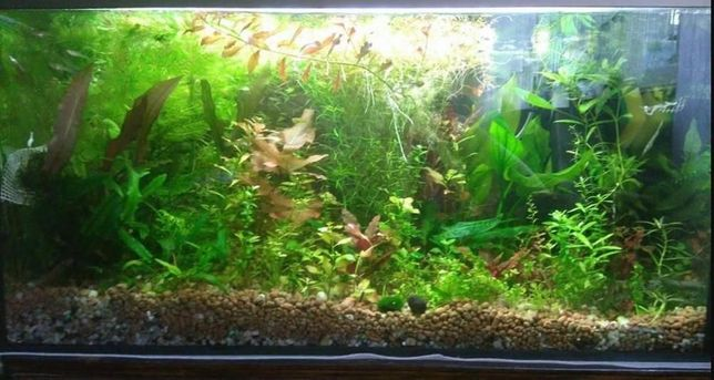 zestaw roślin 20 szt
