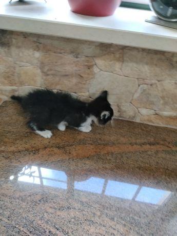 Dou dois gatos pretos e brancos