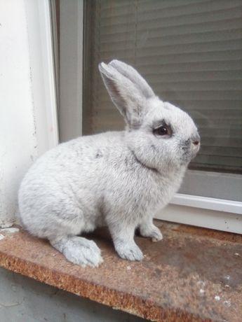 Продам кролики ,