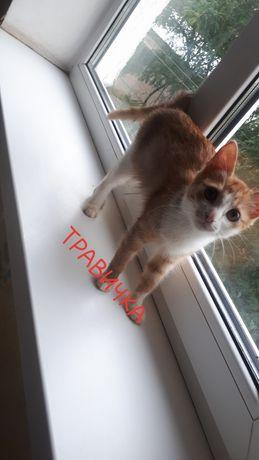 Котенок девочка 4 месяца лоток знает рыже-белая