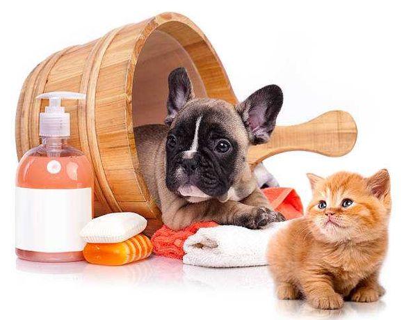 Pet Shop - Banhos e Tosquias