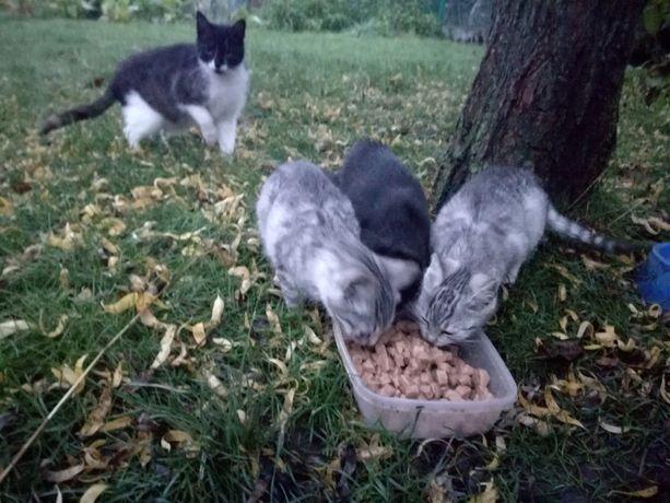 Trzy kociaki szukają domu.