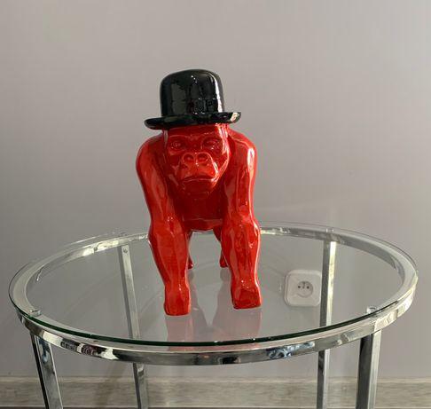 Goryl w kapeluszu