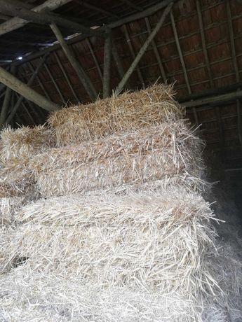 Feno palha pasto, de trigo, aveia. Casais Azenha - Tremês - Santarém