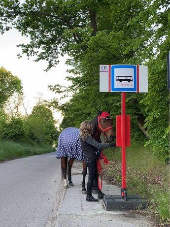 Dzierżawa konia/ samodzielne jazdy