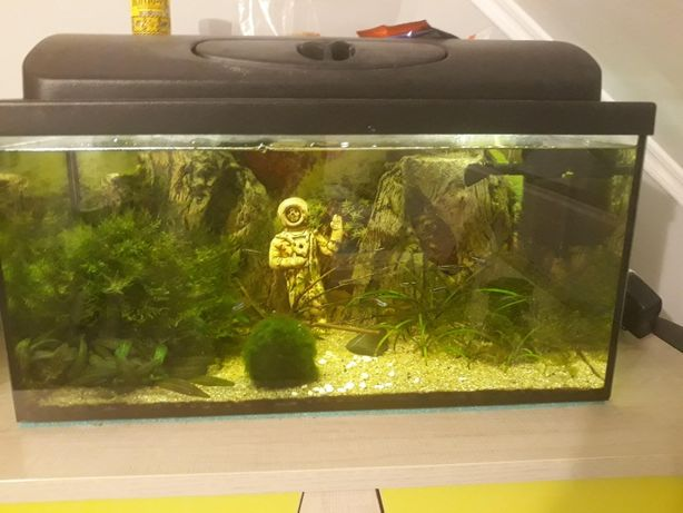 Akwarium 60x30x30 z wyposażeniem