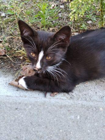 Śliczny kotek szuka domu