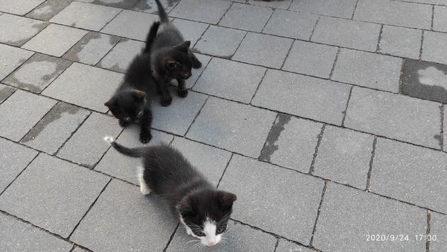 Oddam kocięta