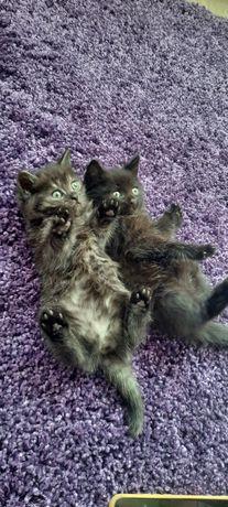 Котята, кошки, котенки