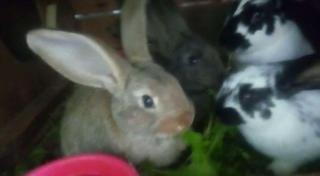 Кролики полтора месяца