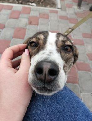 Мaренга - идеальная собака ищет дом!