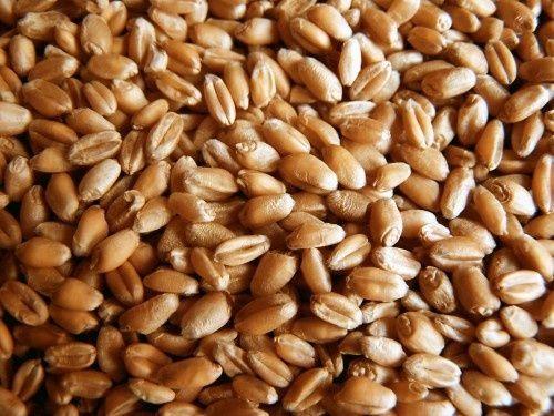 Ячмінь пшениця / ячмень пшеница