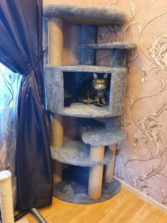 Когтеточка для Мейн-Куна. Дряпка, когетка, дом для кота, когтедралка!