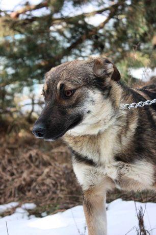 Вуди 7 месяцев, собака, собачка, пёс,