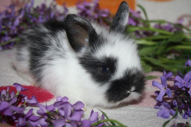 Красивейшие крольчата миники уже в продаже