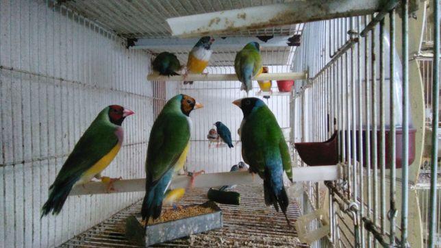 Últimas aves para ceder