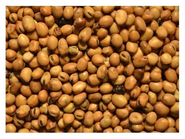 BOBIK Ziarno nasiona