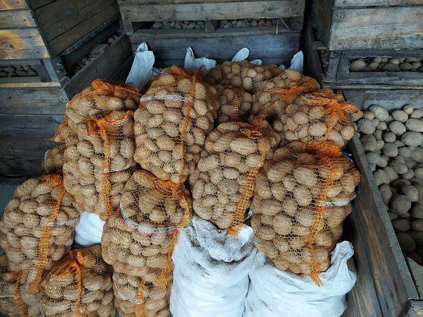 Ziemniaki ekologiczne od Rolnika Tajfun żółte wspólpraca-transport