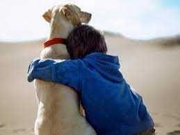 Cuido do seu animal de estimação