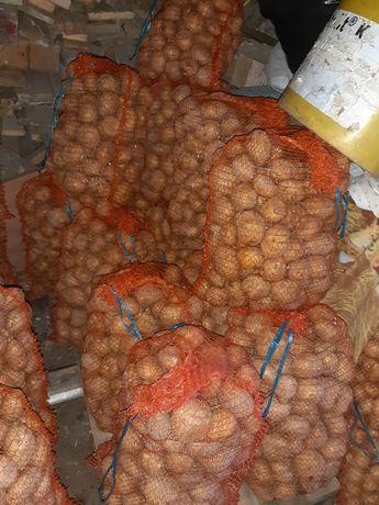 Ziemniaki odmiana vineta