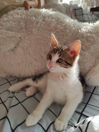 Котик, кот Рудик 2 месяца