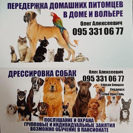 Дрессировка собак, передержка собак