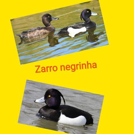 Várias raças de patos ornamentais