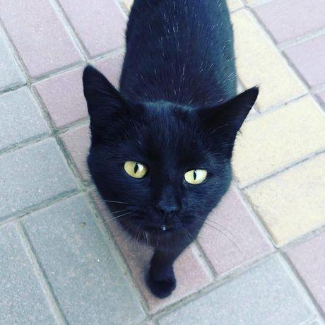 Черный котенок в дар девочка