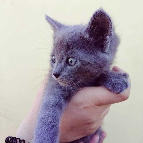Отдадим котиков в хорошие руки