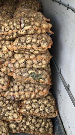 Ziemniaki jadalne młode Lord