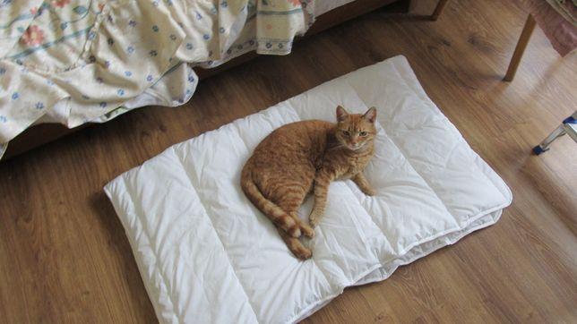 legowisko dla pas/kota