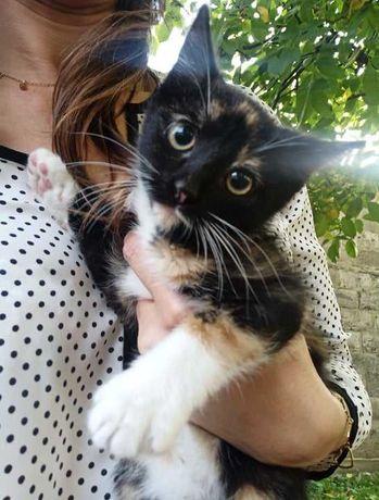 Lady przepięknie umaszczona kotka do adopcji