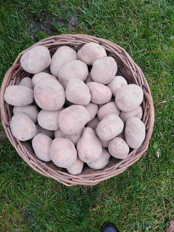 Ziemniaki jadalne, domowe Gala i Bellarosa