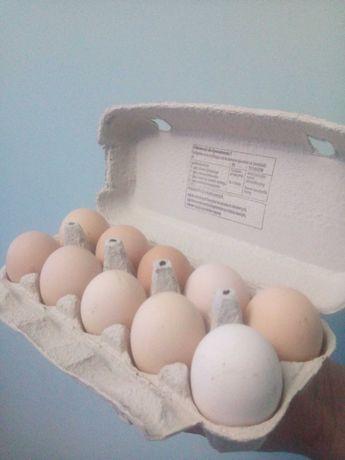Jajka z howu naturalnego