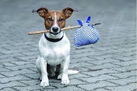 Передержка и уход за домашними животными.