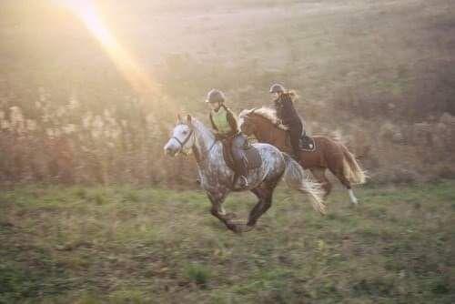Денник в аренду.Конюшня.Лошади.