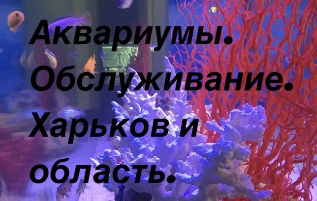 100 гр. изготовление аквариумов.