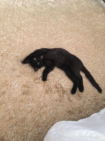 Чёрный котёнок котик кот ищет дом